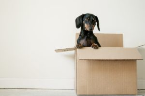 Perth Best Removals Move